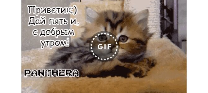 Прикольные гифки с котятами, юбилеем