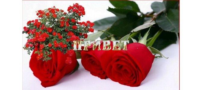 Картинка с розами привет